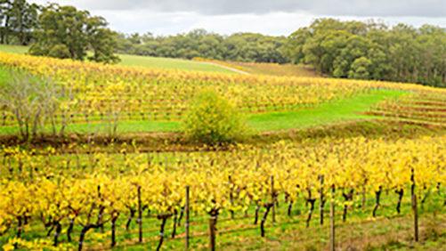 Control vineyard weeds this season
