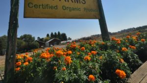 Nearly $18M in Organic Agriculture Grants Available