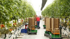 Is Being Organic Enough for Vegetable Growers?