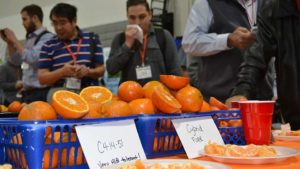 Florida Citrus Growers Find Solace in Eye of the Storm
