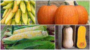 New Vegetable Varieties Coming Your Way