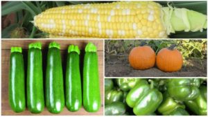 New Vegetable Introductions from Distributors in 2018