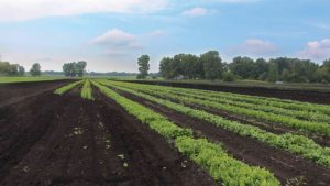 3 Studies on How Fertility Impacts Vegetable Production