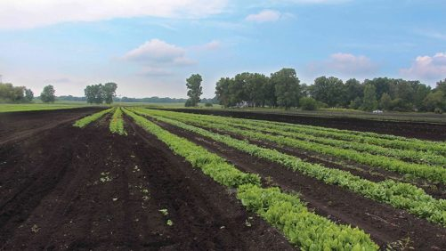 3 Studies on How Fertility Impacts Vegetable Production
