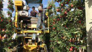 Tariffs Hit Fruit Growers Hard at Harvest