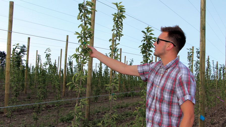 Young Grower's Apple Training Shows Innovation and Investment