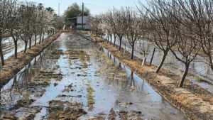 Proper Almond Irrigation Practices for This Season
