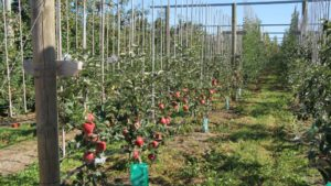 New Zealand Fruit Growers Look to the Future of Production, Varieties