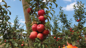 8 Things I Learned About New Zealand Apple Production (and You Should, too)