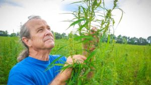Will it Fly? Senate-Backed Farm Bill Makes Way for Hemp Growth