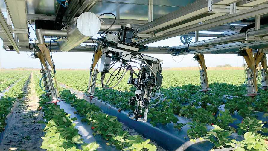 Harvest CROO Robotics platform wheels pick ripe strawberries