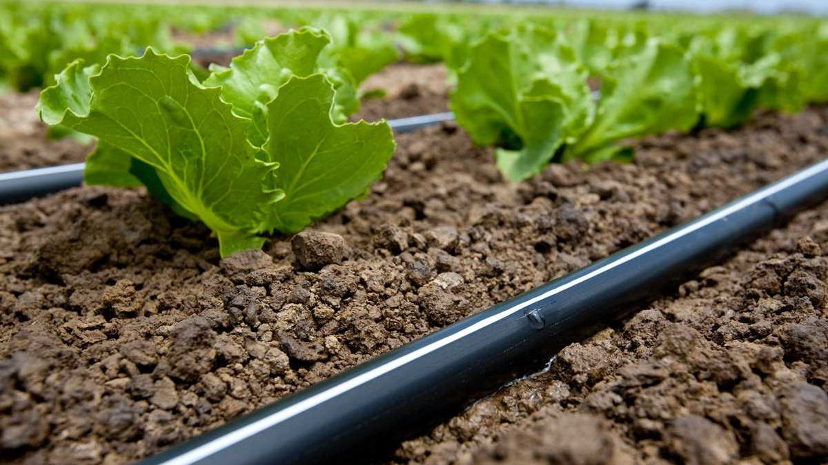 How to Get What You Need from Fertigation - Growing Produce