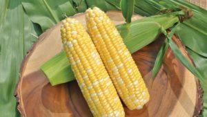 Sweet Corn Spurs Syngenta to Acquire Abbott & Cobb