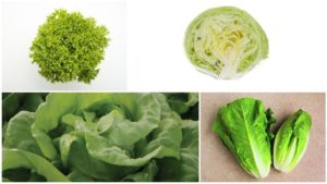 15 Great Lettuce Varieties You'll Want to Grow