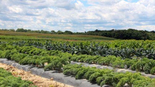 Take a Tour of Janoski's Farm [Slideshow]
