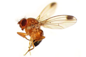 Insect Invaders: Perils of Global Trade