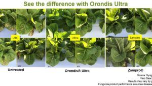 Breaking the downy mildew disease cycle in lettuce