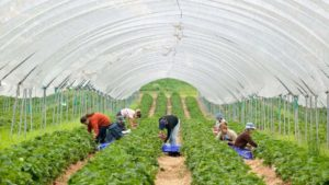 Labor Shortages Hit Growers Worldwide