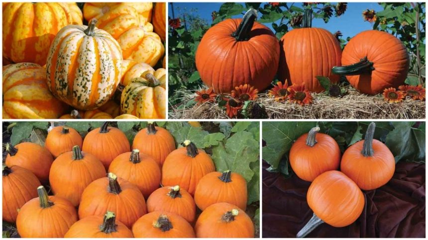 10 Pumpkins You'll Love Growing