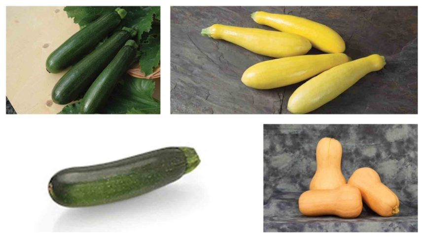 7 Squash Varieties to Add to Your Fall Crop