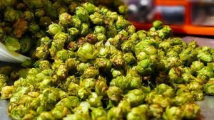 Future of Florida Hops Just Got a Little Brighter