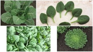 10 Leafy Green Varieties You'll Want to Grow