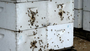 New California Agriculture Program is a Boost for Bees