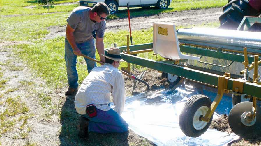 Workers laying out reflective mulch for citrus trial