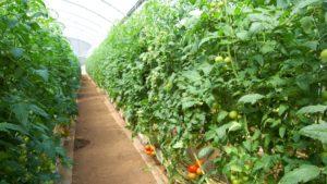 A Beginning Greenhouse Grower? Avoid Beginner Mistakes