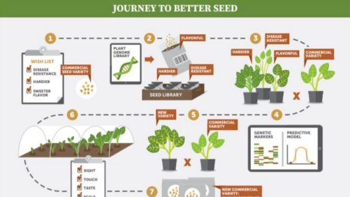 Seed Innovations Benefit Growers and the Globe