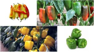 17 Pepper Varieties You'll Want to Grow