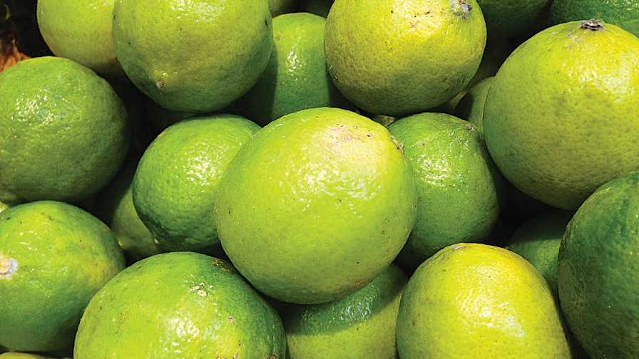 Persian limes in a group