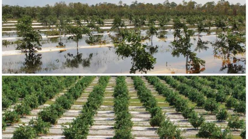 1 Year After Hurricane Irma, Florida Agriculture Stronger