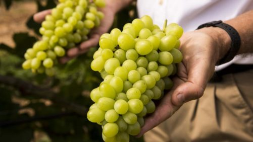 California Table Grape Industry Continues Record-Breaking Shipping Season