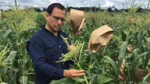 Scientists Out to Find Secrets of Super Sweet Corn
