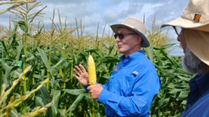 Abbott & Cobb and Syngenta Seed Merger Brings Breeding Synergies