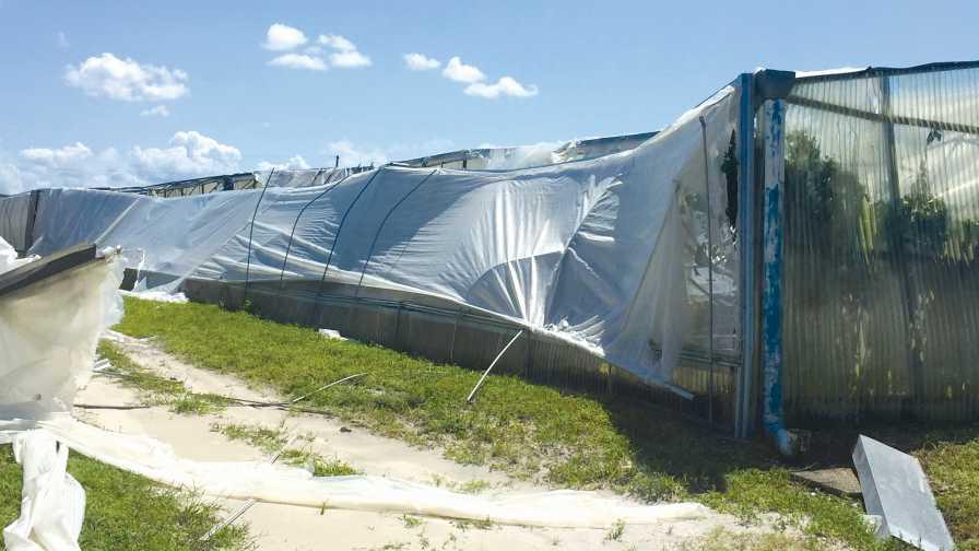 Dilley Citrus Nursery post Hurricane Irma storm damage