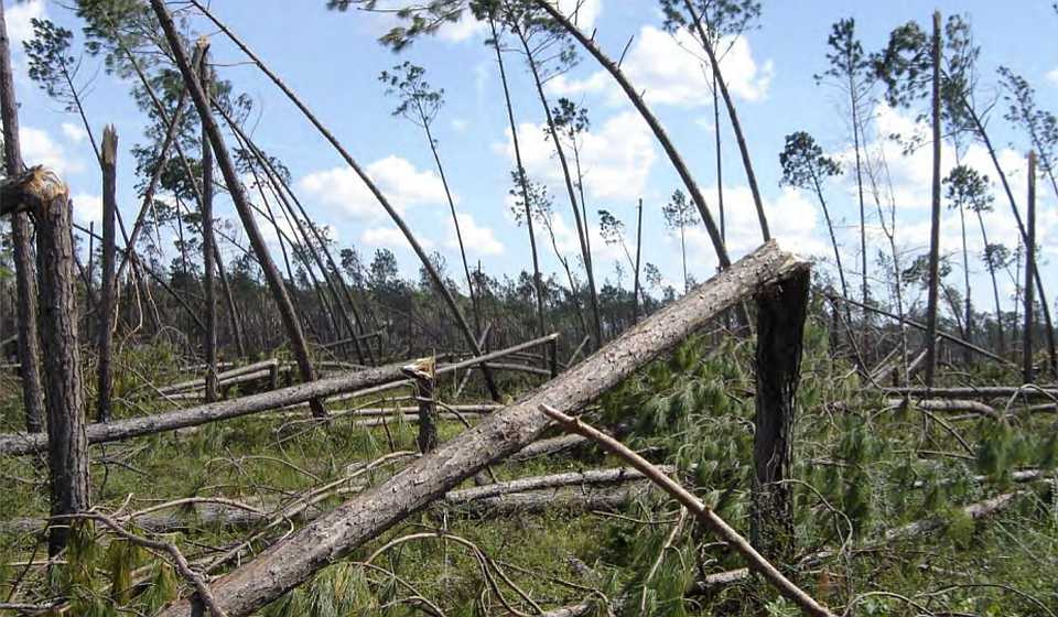 Catastrophic timber damage from Hurricane Michael near Blountstown, FL