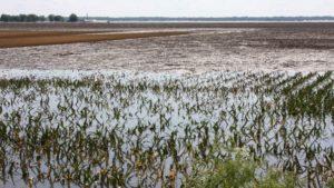 Carolina Growers Cope with Extensive Hurricane Florence Damage