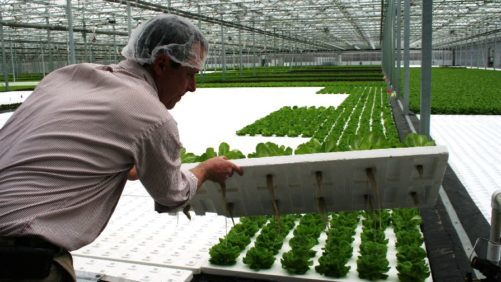 Hydroponic Organic Produce: Year One