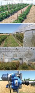 Tye-Thompson-greenhouse-collage-1