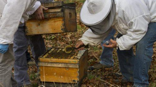 Can Mushrooms Help Boost Honey Bee Health?