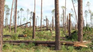 Florida Crop Losses Mired in the Millions Following Hurricane Michael