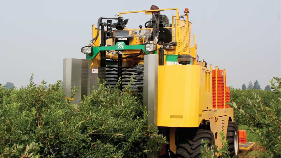 Mechanical blueberry harvester in field