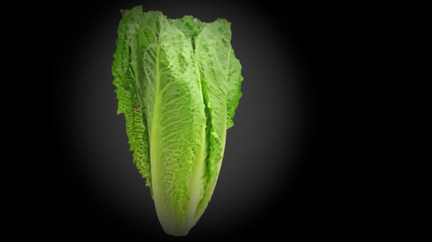 CDC: Dump All Romaine Due to New E. coli Outbreak