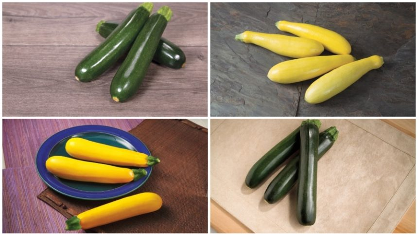 15 Zucchini and Squash Varieties to Add to Your Crop Mix