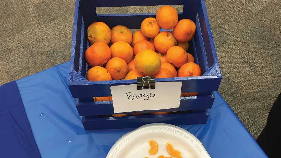 UF Bingo orange hybrid variety on display