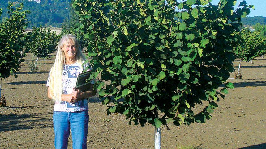New Hazelnut Release Resists Eastern Filbert Blight