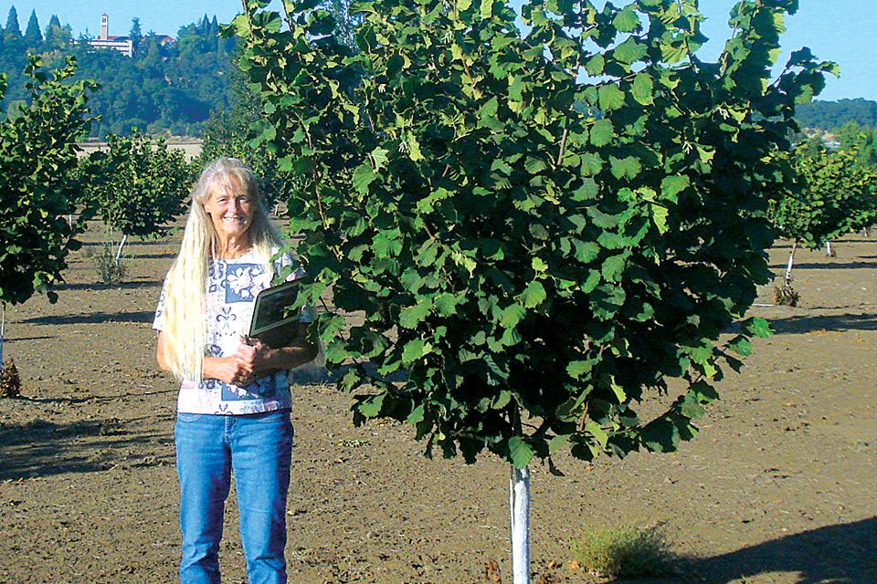 New Hazelnut Release Resists Eastern Filbert Blight Growing Produce