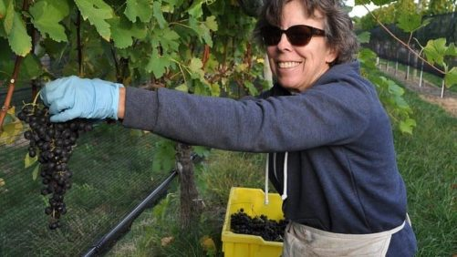 Cornell Viticulture Innovator Recognized for Integrated Pest Management Excellence